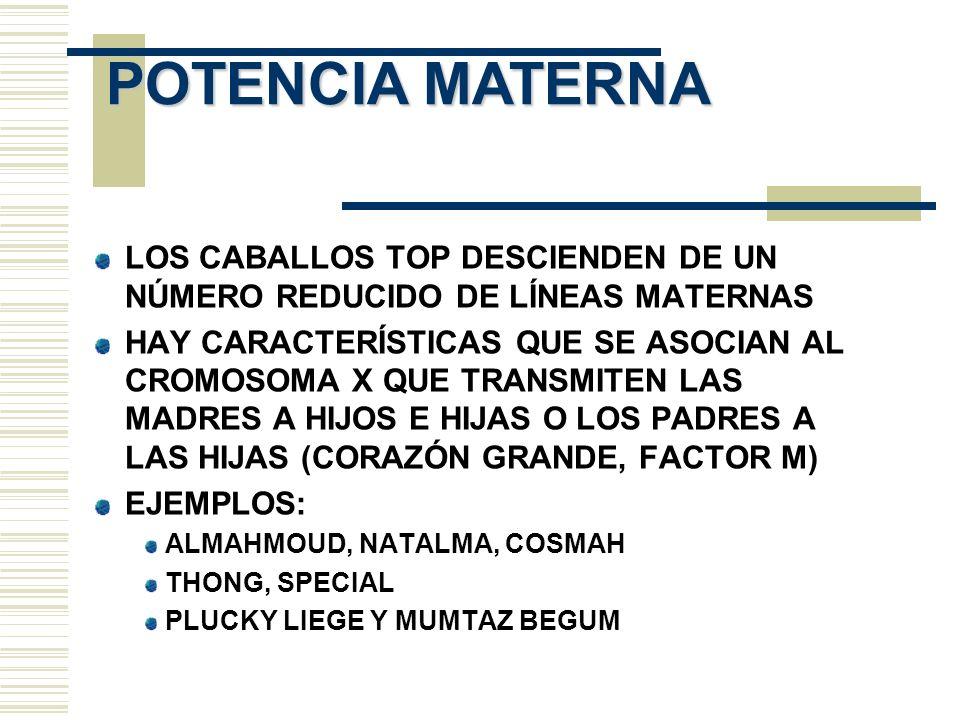 POTENCIA MATERNA LOS CABALLOS TOP DESCIENDEN DE UN NÚMERO REDUCIDO DE LÍNEAS MATERNAS HAY CARACTERÍSTICAS QUE SE ASOCIAN AL CROMOSOMA X QUE TRANSMITEN
