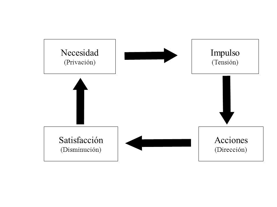 Necesidad (Privación) Impulso (Tensión) Satisfacción (Disminución) Acciones (Dirección)