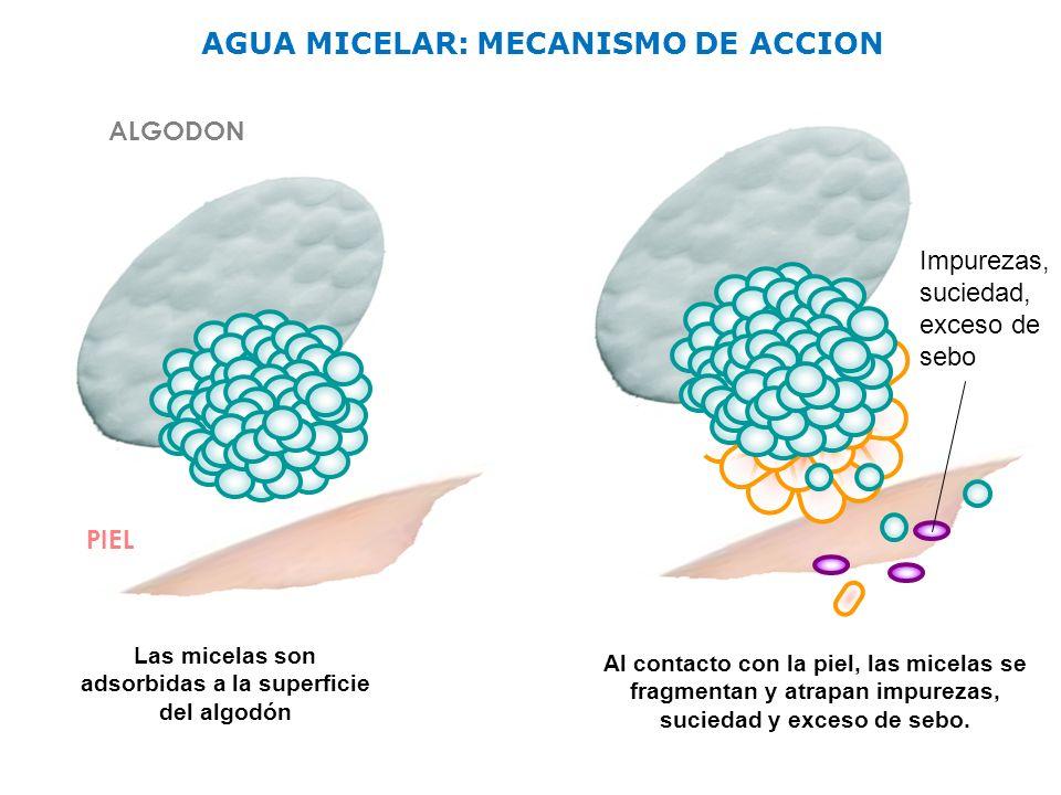 ALGODON PIEL Las micelas son adsorbidas a la superficie del algodón AGUA MICELAR: MECANISMO DE ACCION Al contacto con la piel, las micelas se fragment