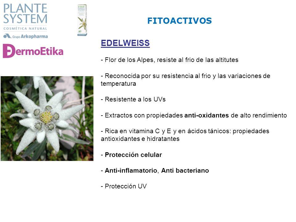 EDELWEISS - Flor de los Alpes, resiste al frio de las altitutes - Reconocida por su resistencia al frio y las variaciones de temperatura - Resistente