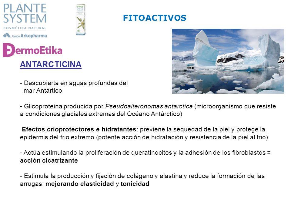 ANTARCTICINA - Descubierta en aguas profundas del mar Antártico - Glicoproteina producida por Pseudoalteronomas antarctica (microorganismo que resiste