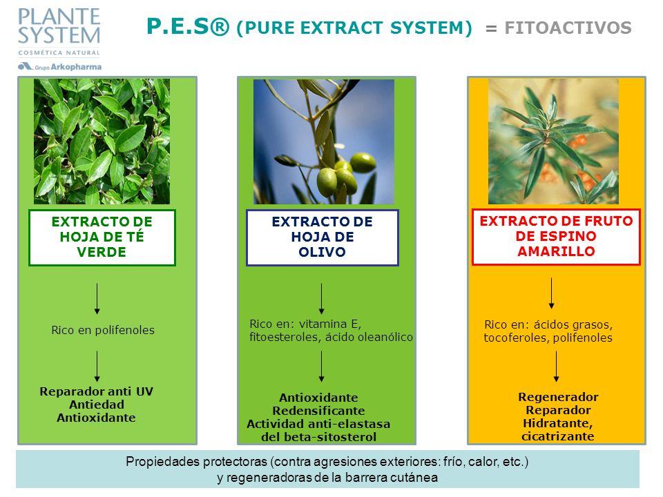 EXTRACTO DE HOJA DE TÉ VERDE Reparador anti UV Antiedad Antioxidante EXTRACTO DE HOJA DE OLIVO Antioxidante Redensificante Actividad anti-elastasa del
