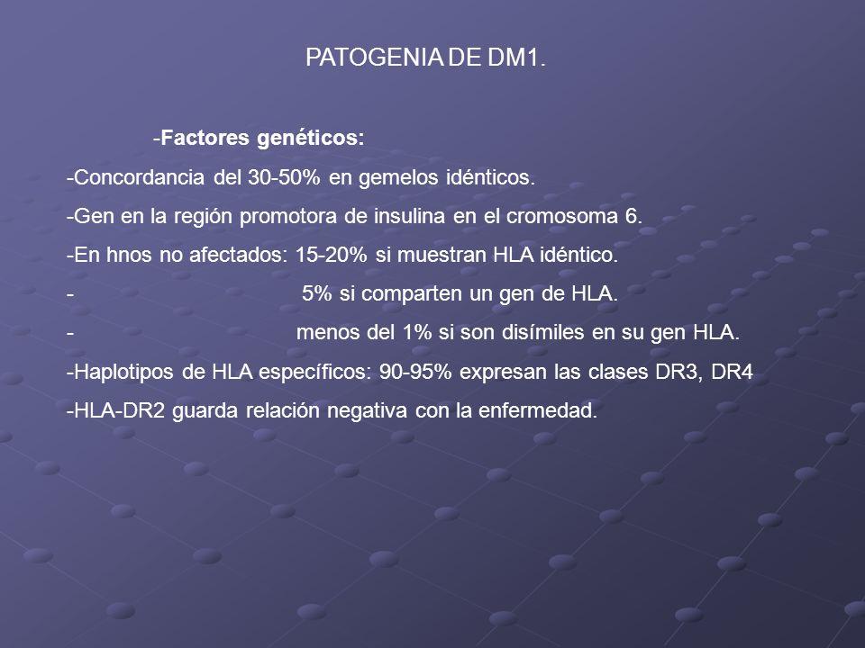 PATOGENIA DE DM1. -Factores genéticos: -Concordancia del 30-50% en gemelos idénticos. -Gen en la región promotora de insulina en el cromosoma 6. -En h