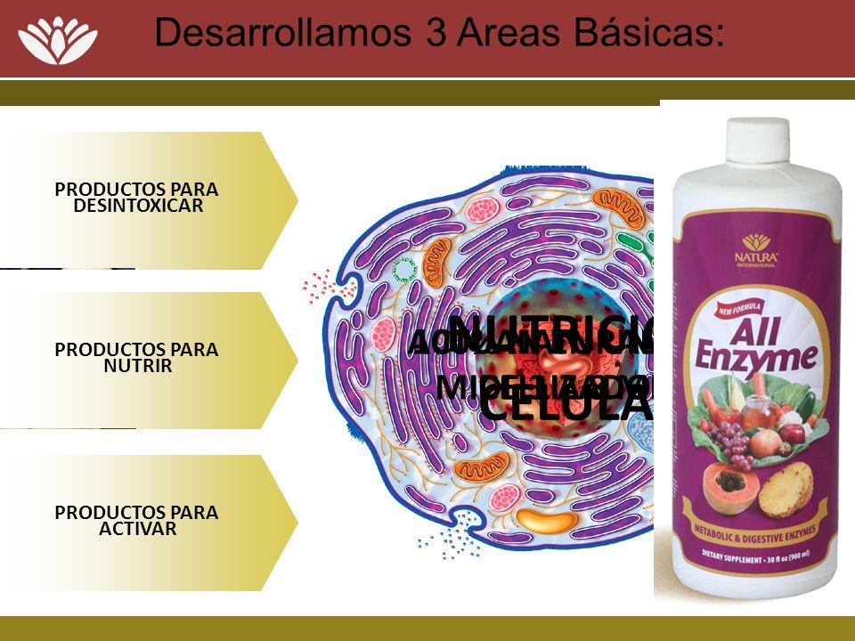 Desarrollamos 3 Areas Básicas: 1 2 3 PRODUCTOS PARA DESINTOXICAR PRODUCTOS PARA NUTRIR PRODUCTOS PARA ACTIVAR NUTRICION CELULAR 100% NATURALES MICELLI