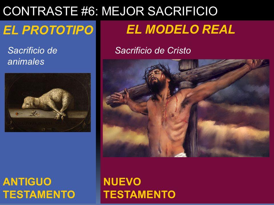 NUEVO TESTAMENTO ANTIGUO TESTAMENTO CONTRASTE #6: MEJOR SACRIFICIO EL PROTOTIPO EL MODELO REAL Sacrificio de animales Sacrificio de Cristo
