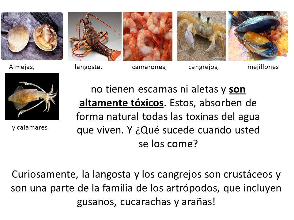Curiosamente, la langosta y los cangrejos son crustáceos y son una parte de la familia de los artrópodos, que incluyen gusanos, cucarachas y arañas! A