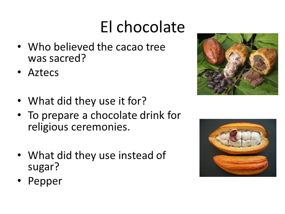 El chocolate Who believed the cacao tree was sacred? Aztecs What did they use it for? To prepare a chocolate drink for religious ceremonies. What did