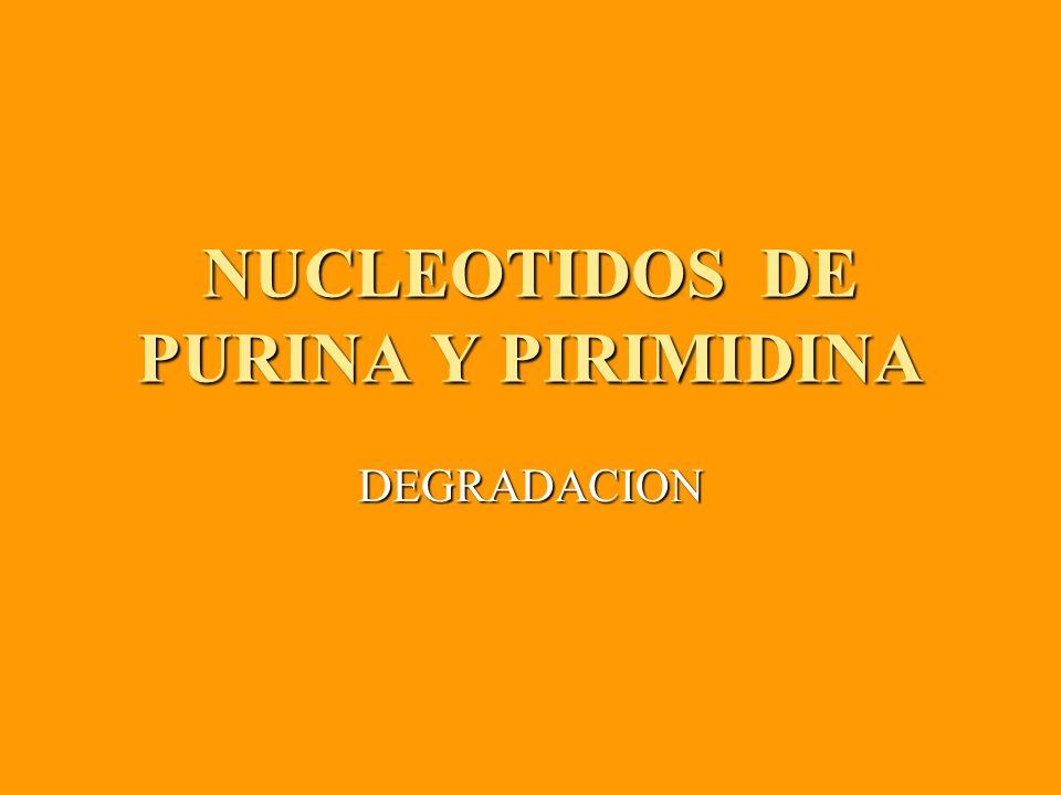 NUCLEOTIDOS DE PURINA Y PIRIMIDINA DEGRADACION