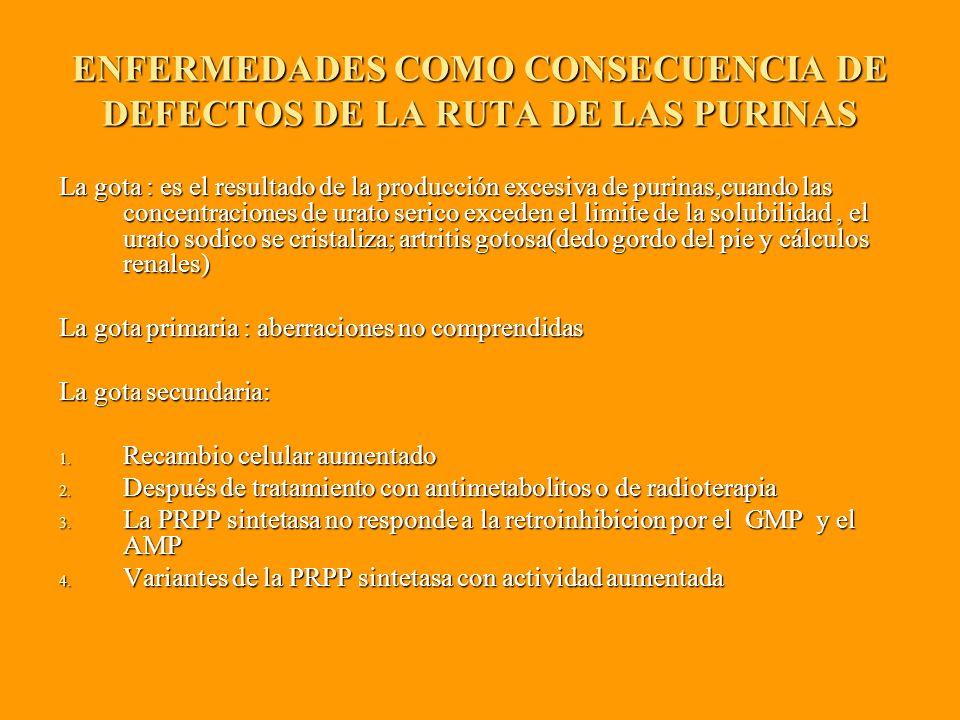 ENFERMEDADES COMO CONSECUENCIA DE DEFECTOS DE LA RUTA DE LAS PURINAS La gota : es el resultado de la producción excesiva de purinas,cuando las concentraciones de urato serico exceden el limite de la solubilidad, el urato sodico se cristaliza; artritis gotosa(dedo gordo del pie y cálculos renales) La gota primaria : aberraciones no comprendidas La gota secundaria: 1.