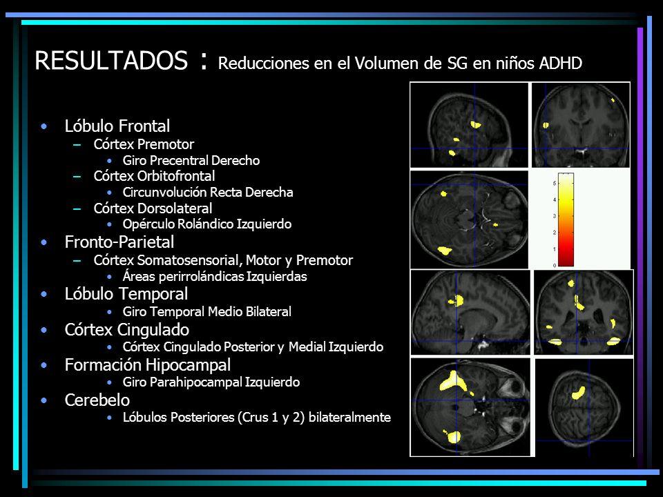 RESULTADOS : Reducciones en el Volumen de SG en niños ADHD Lóbulo Frontal –Córtex Premotor Giro Precentral Derecho –Córtex Orbitofrontal Circunvolució