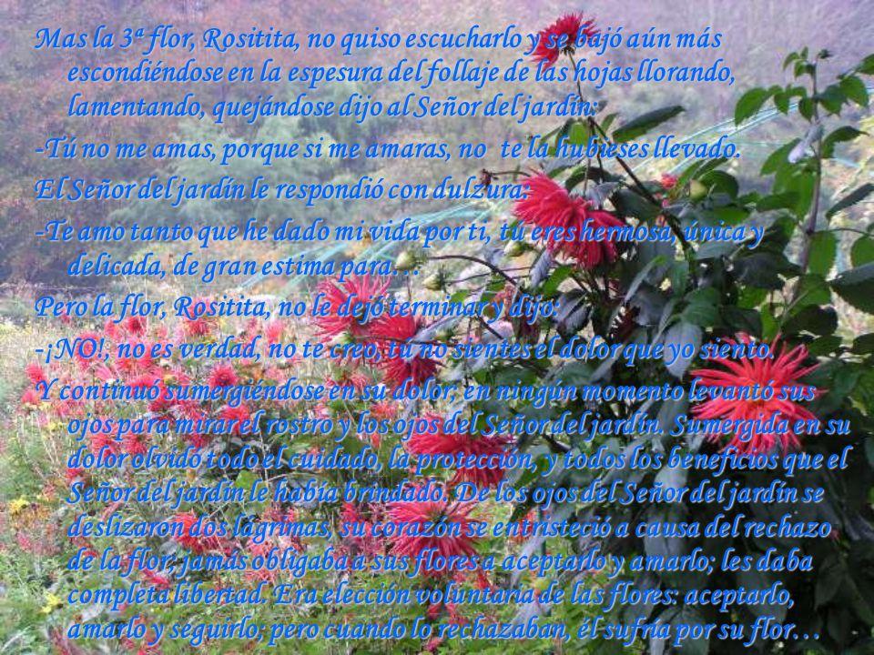 Mas la 3ª flor, Rositita, no quiso escucharlo y se bajó aún más escondiéndose en la espesura del follaje de las hojas llorando, lamentando, quejándose