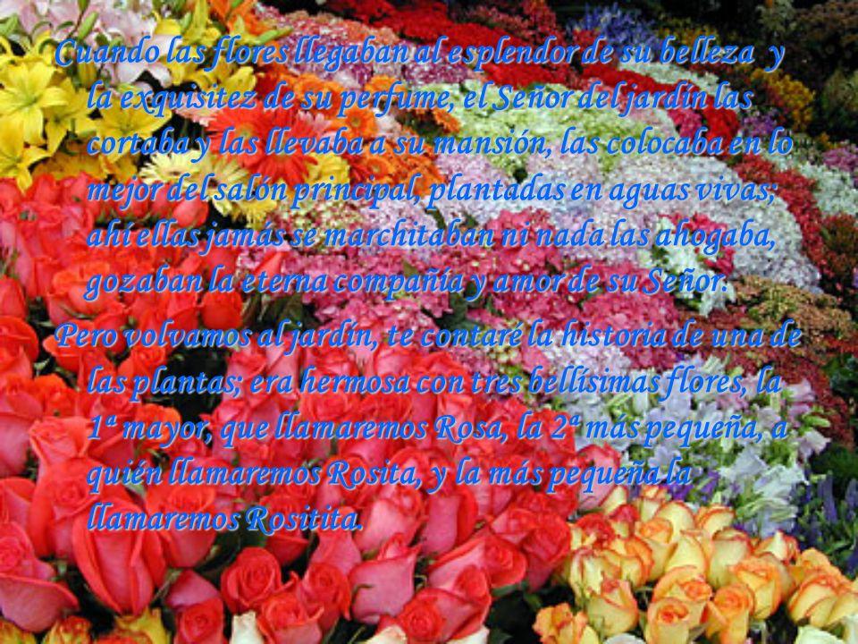 Cuando las flores llegaban al esplendor de su belleza y la exquisitez de su perfume, el Señor del jardín las cortaba y las llevaba a su mansión, las c