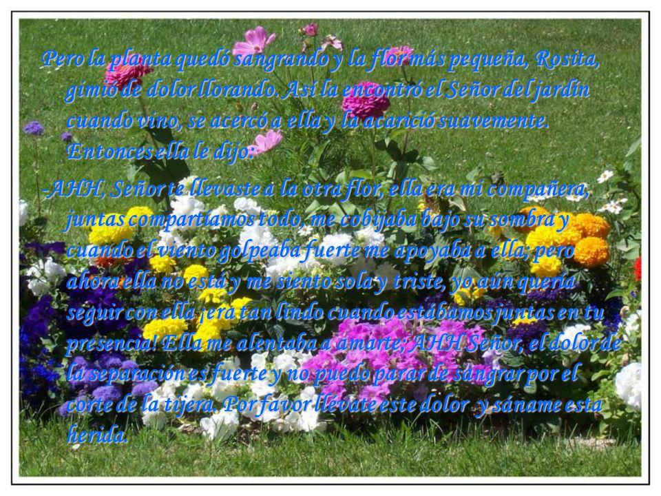 El señor del jardín tocó con amor el tallo sangrante y paró de sangrar mientras decía a la 2º flor, Rosita: -En las sombras de mis alas te ampararé y debajo de ella estarás segura; te cuidaré como a la niña de mis ojos, porque eres de gran estima a mis ojos, flor escogida desde antes que te formases; delicada y única, flor muy amada comprada con precio muy alto.