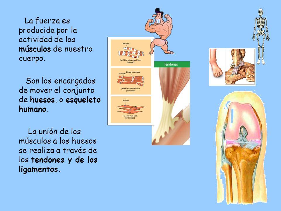 7 La fuerza es producida por la actividad de los músculos de nuestro cuerpo.
