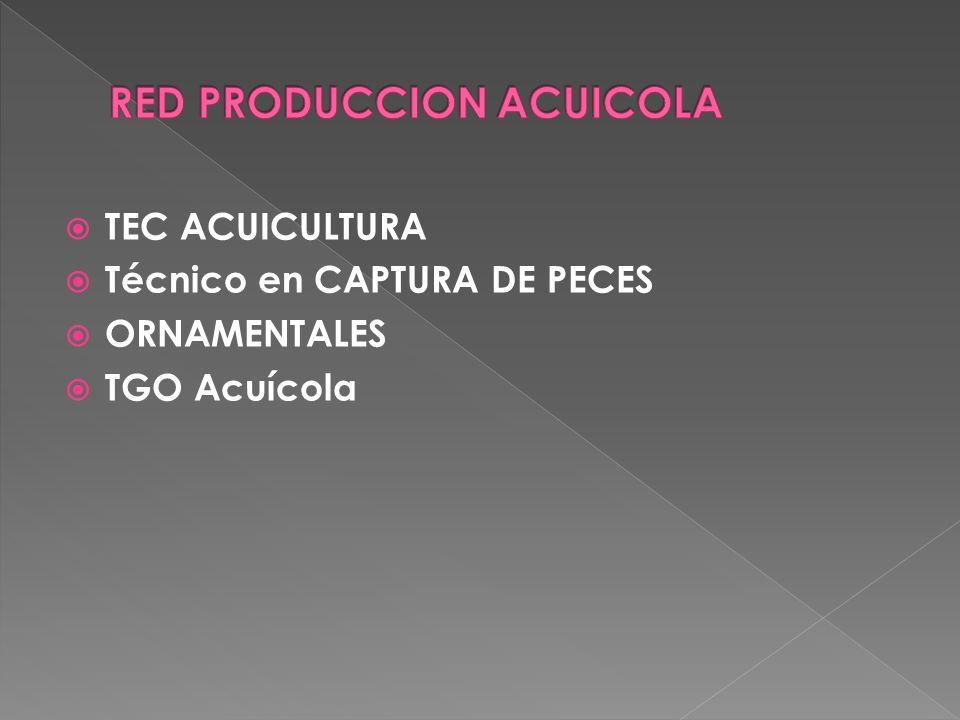 OP LABORES DE CAMPO EN BANANO OP LABORES DE COSECHA Y EMPAQUE EN BANANO OP PRODUCCION DE FLORES Y FOLLAJES TEC Cultivo y Beneficio del Tabaco TEC Manejo integrado del cultivo del cacao TEC MECANICO RURAL TEC Producción Agropecuaria TEC PRODUCCIÓN DE CAFE TEC SUPERVISION EN PRODUCCION Y POSCOSECHA DE FLORES Y FOLLAJES TEC SUPERVISOR ACTIVIDADES BANANERAS