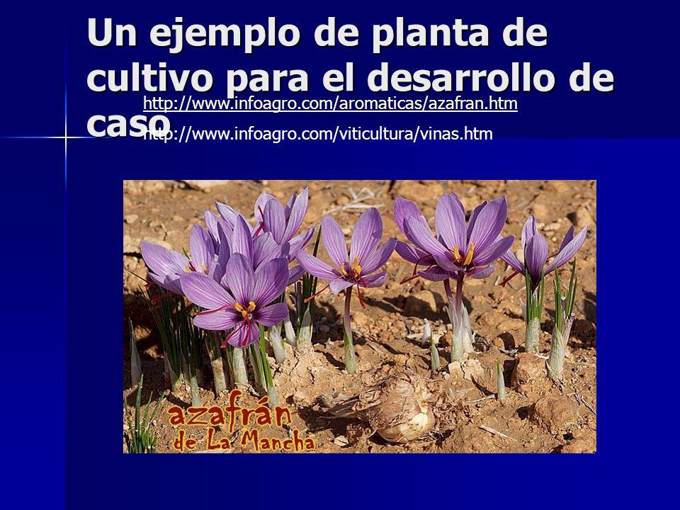 Un ejemplo de planta de cultivo para el desarrollo de caso http://www.infoagro.com/aromaticas/azafran.htm http://www.infoagro.com/viticultura/vinas.ht