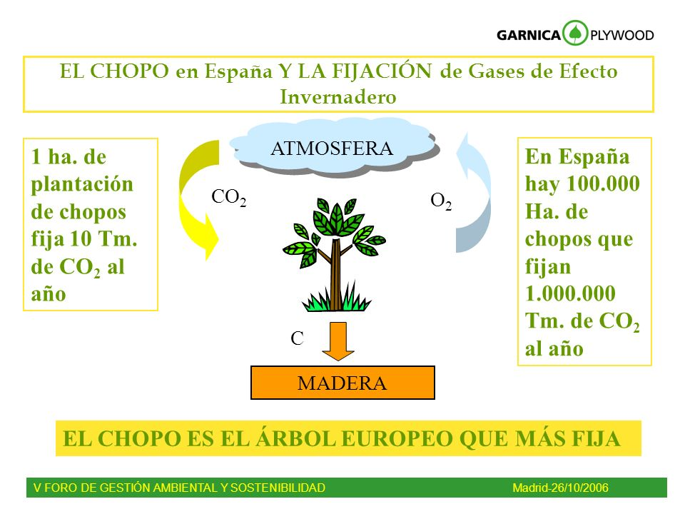 EL CHOPO en España Y LA FIJACIÓN de Gases de Efecto Invernadero En España hay 100.000 Ha. de chopos que fijan 1.000.000 Tm. de CO 2 al año ATMOSFERA M