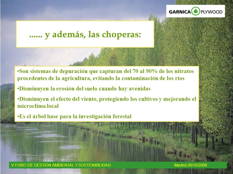 ...... y además, las choperas: Son sistemas de depuración que capturan del 70 al 90% de los nitratos procedentes de la agricultura, evitando la contam