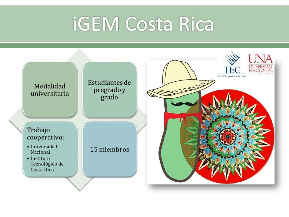 Modalidad universitaria Estudiantes de pregrado y grado Trabajo cooperativo: Universidad Nacional Instituto Tecnológico de Costa Rica 15 miembros