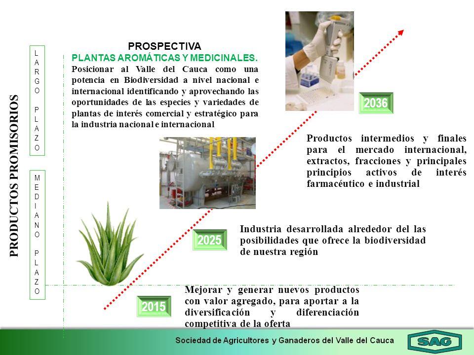 2015 2036 LARGOPLAZOLARGOPLAZO 2025 MEDIANOPLAZOMEDIANOPLAZO PROSPECTIVA PLANTAS AROMÁTICAS Y MEDICINALES. Posicionar al Valle del Cauca como una pote