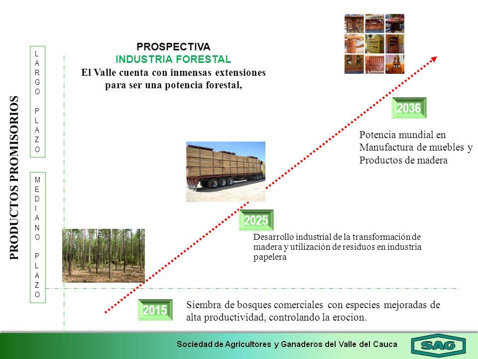 2036 LARGOPLAZOLARGOPLAZO 2025 MEDIANOPLAZOMEDIANOPLAZO PROSPECTIVA INDUSTRIA FORESTAL El Valle cuenta con inmensas extensiones para ser una potencia