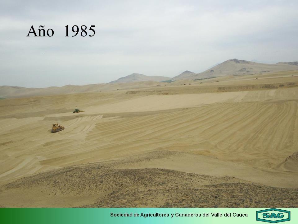Año 1985