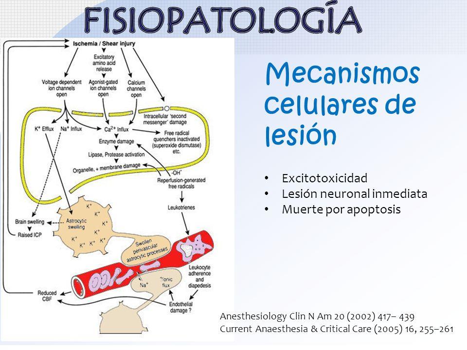 Mecanismos celulares de lesión Excitotoxicidad Lesión neuronal inmediata Muerte por apoptosis Anesthesiology Clin N Am 20 (2002) 417– 439 Current Anae