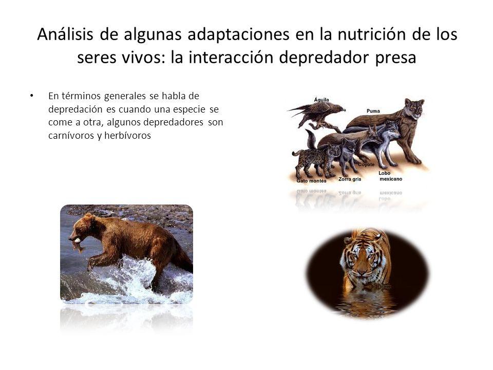 Análisis de algunas adaptaciones en la nutrición de los seres vivos: la interacción depredador presa Que es depredación En ecología la depredación es un tipo de interacción biológica en la que una especie (el depredador) caza a otra (presa), para subsistir.ecología interacción biológica especie