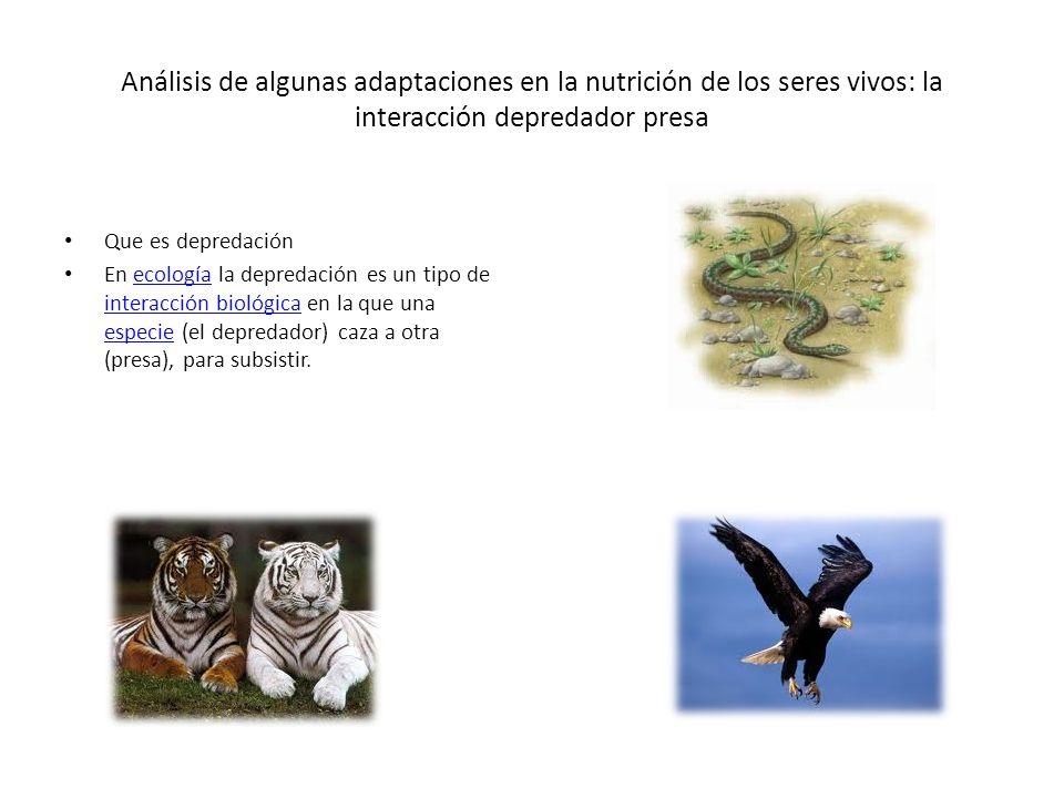 Análisis de algunas adaptaciones en la nutrición de los seres vivos: la interacción depredador presa Que es depredación En ecología la depredación es