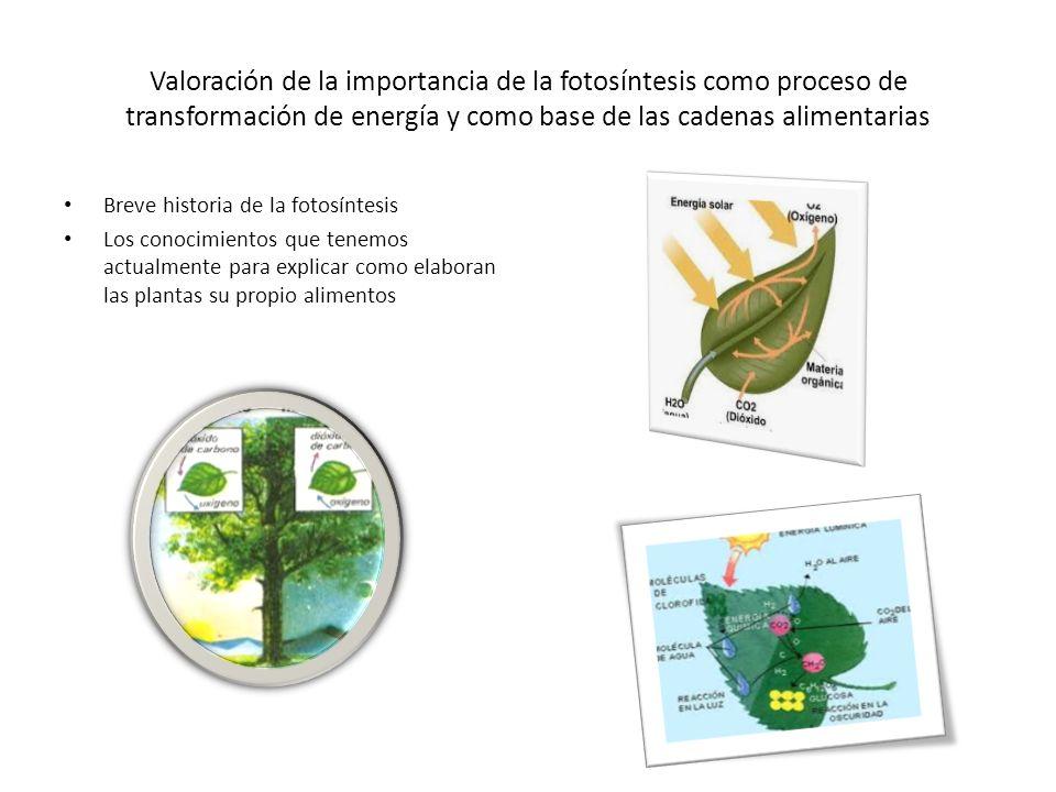 Valoración de la importancia de la fotosíntesis como proceso de transformación de energía y como base de las cadenas alimentarias Los primeros animales como los autótrofos y heterótrofos los primeros pueden elaborar su comida los segundos se alimentaron de plantas
