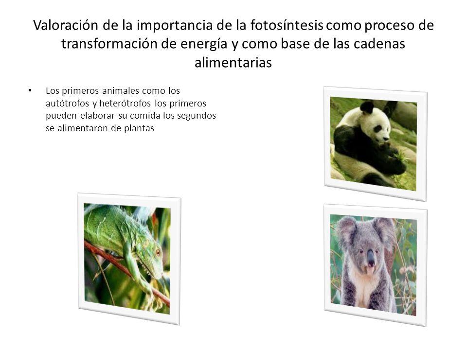 Valoración de la importancia de la fotosíntesis como proceso de transformación de energía y como base de las cadenas alimentarias Los primeros animale
