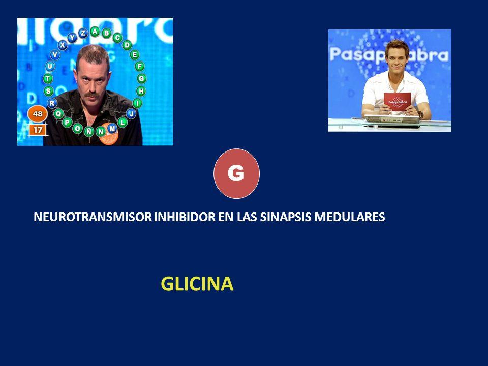 G NEUROTRANSMISOR INHIBIDOR EN LAS SINAPSIS MEDULARES GLICINA