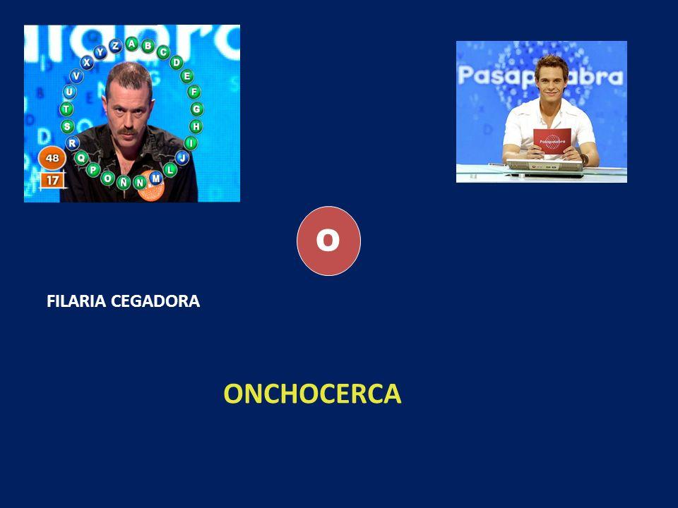 O FILARIA CEGADORA ONCHOCERCA