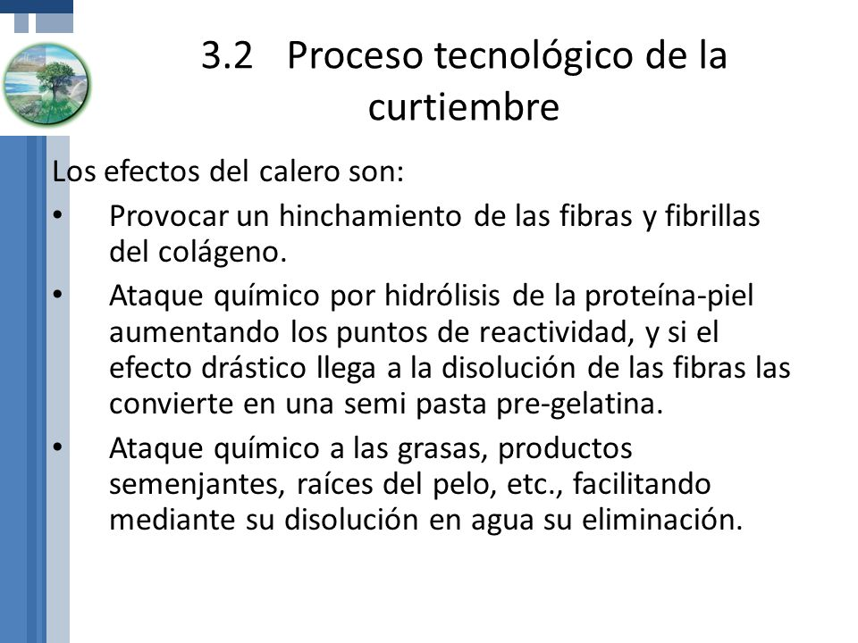 3.2Proceso tecnológico de la curtiembre Los efectos del calero son: Provocar un hinchamiento de las fibras y fibrillas del colágeno. Ataque químico po