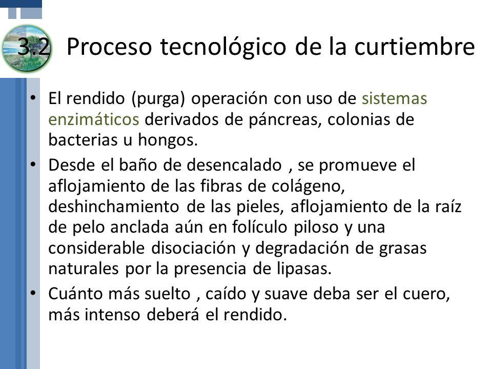 3.2Proceso tecnológico de la curtiembre El rendido (purga) operación con uso de sistemas enzimáticos derivados de páncreas, colonias de bacterias u ho