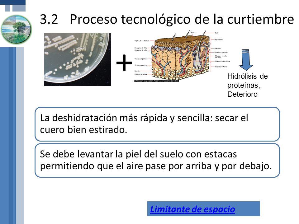 3.2Proceso tecnológico de la curtiembre La deshidratación más rápida y sencilla: secar el cuero bien estirado. Se debe levantar la piel del suelo con