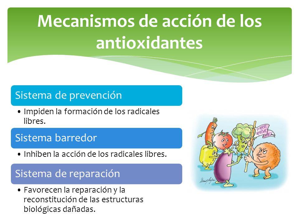 Mecanismos de acción de los antioxidantes Sistema de prevención Impiden la formación de los radicales libres. Sistema barredor Inhiben la acción de lo