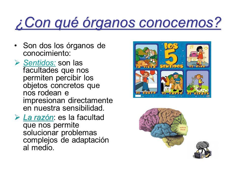 ¿Con qué órganos conocemos? Son dos los órganos de conocimiento: Sentidos: son las facultades que nos permiten percibir los objetos concretos que nos