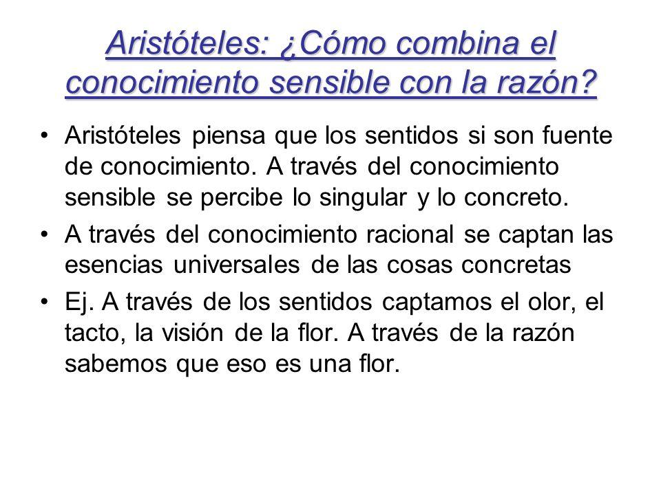 Aristóteles: ¿Cómo combina el conocimiento sensible con la razón? Aristóteles piensa que los sentidos si son fuente de conocimiento. A través del cono