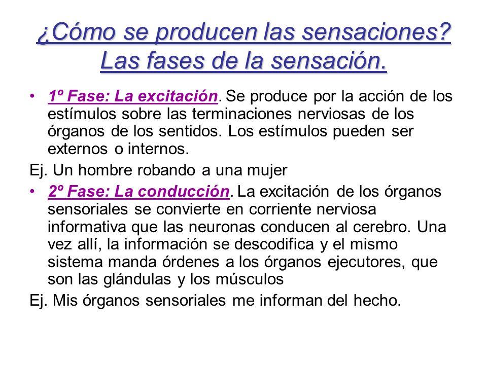 ¿Cómo se producen las sensaciones? Las fases de la sensación. 1º Fase: La excitación. Se produce por la acción de los estímulos sobre las terminacione