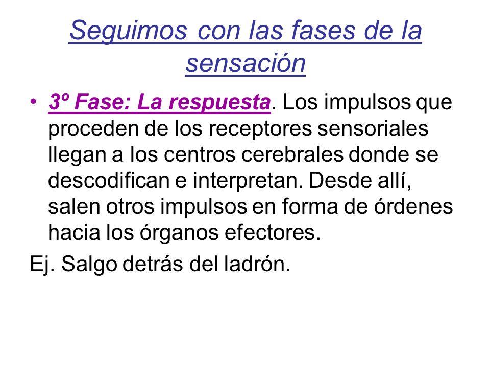 Seguimos con las fases de la sensación 3º Fase: La respuesta. Los impulsos que proceden de los receptores sensoriales llegan a los centros cerebrales