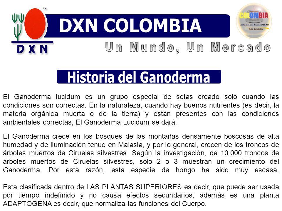 El Ganoderma lucidum es un grupo especial de setas creado sólo cuando las condiciones son correctas.