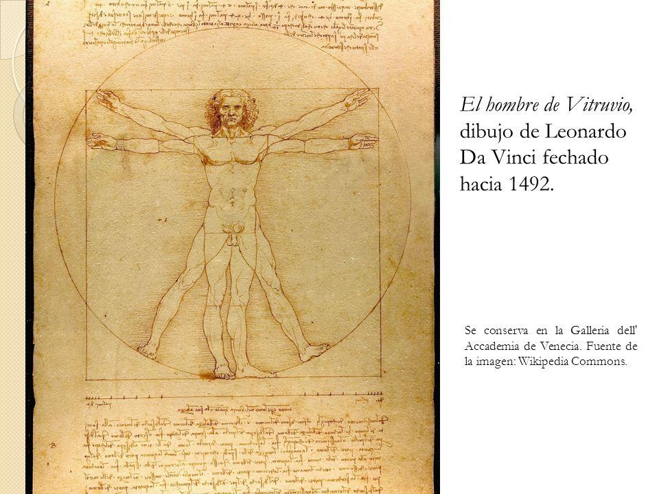 El hombre de Vitruvio, dibujo de Leonardo Da Vinci fechado hacia 1492. Se conserva en la Galleria dell' Accademia de Venecia. Fuente de la imagen: Wik