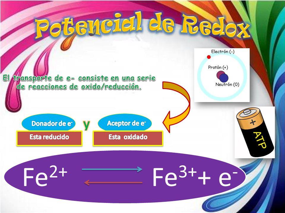 Fe 2+ Fe 3+ + e -