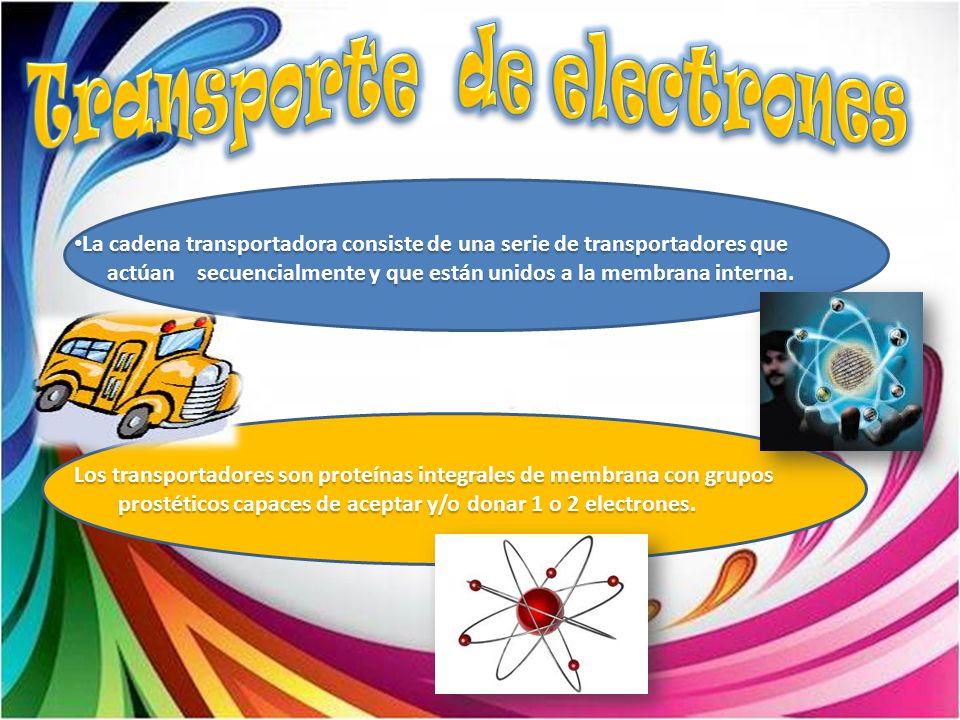 La cadena transportadora consiste de una serie de transportadores que La cadena transportadora consiste de una serie de transportadores que actúan sec
