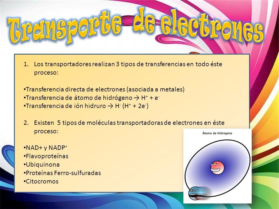 1.Los transportadores realizan 3 tipos de transferencias en todo éste proceso: Transferencia directa de electrones (asociada a metales) Transferencia