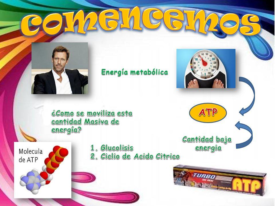 Energía metabólica