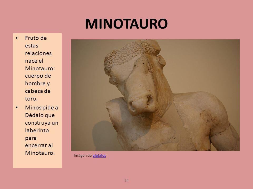 MINOTAURO Fruto de estas relaciones nace el Minotauro: cuerpo de hombre y cabeza de toro. Minos pide a Dédalo que construya un laberinto para encerrar