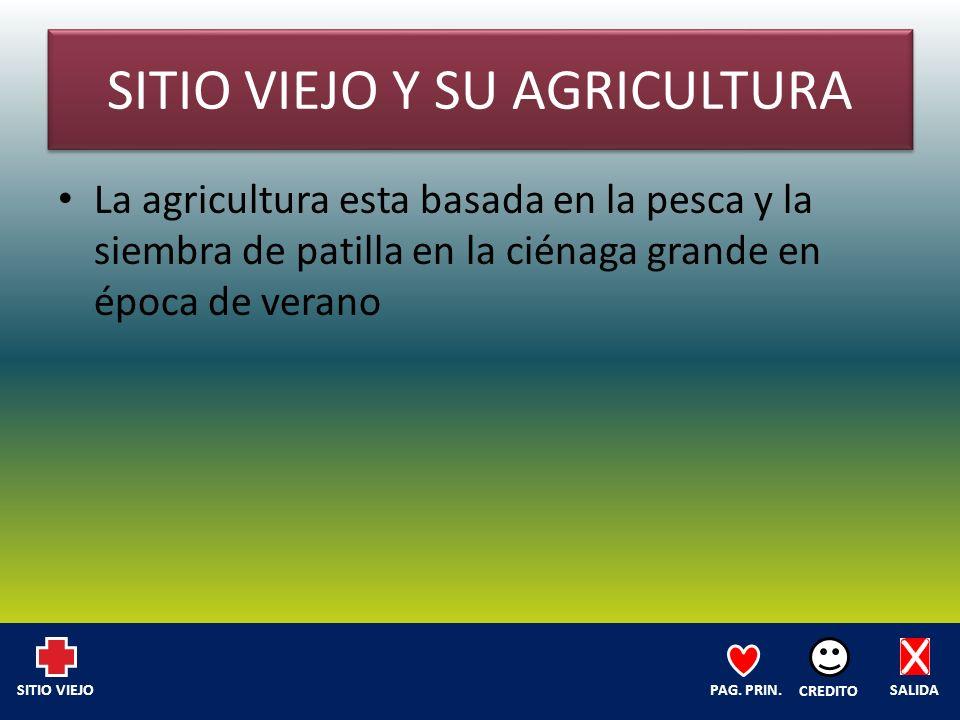 SITIO VIEJO Y SU AGRICULTURA La agricultura esta basada en la pesca y la siembra de patilla en la ciénaga grande en época de verano SALIDA CREDITO PAG.
