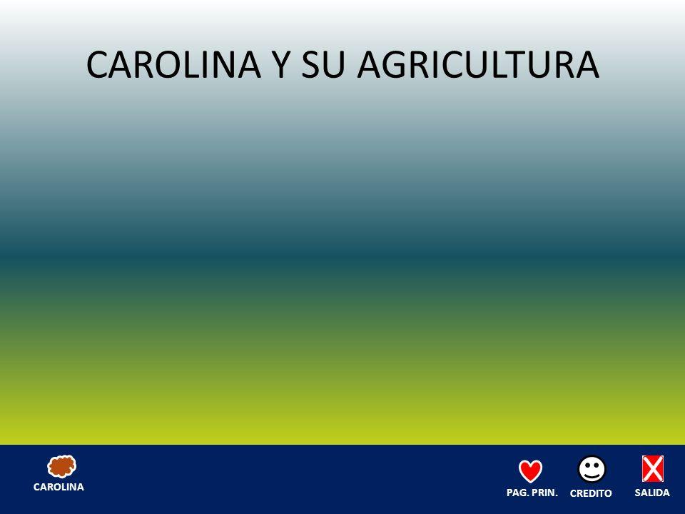 CAROLINA Y SU AGRICULTURA SALIDA CREDITO PAG. PRIN. CAROLINA